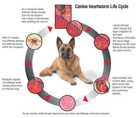 What Human Medicine Can Dogs Take