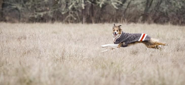 Integrative Veterinary Medicine - Two Rivers Vet